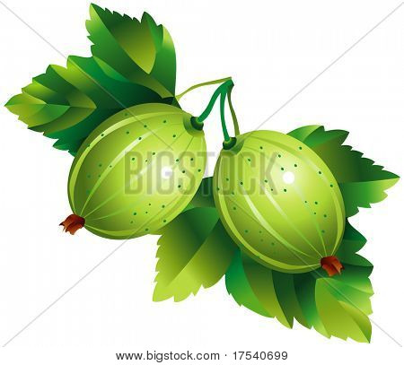 Raster version of vector image of gooseberry