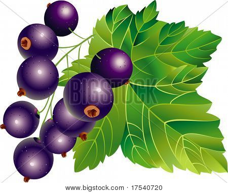 Raster version of vector image of black-currant