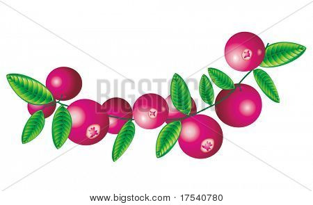 Raster version of vector image of cranberry