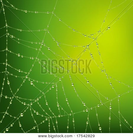 Vector image of the spider web with water drops