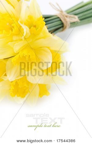 a bunch of daffodils on white background (with sample text)