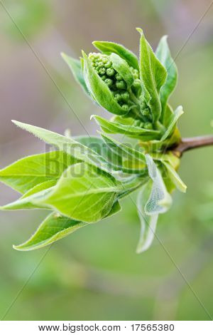 Tree branch with bud environment related background