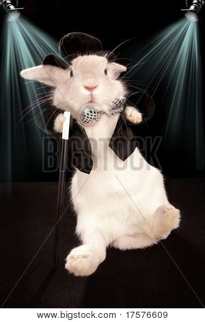 Photo of cute rabbit dancing in top hat  and tuxedo with stick . Isolated on dark background