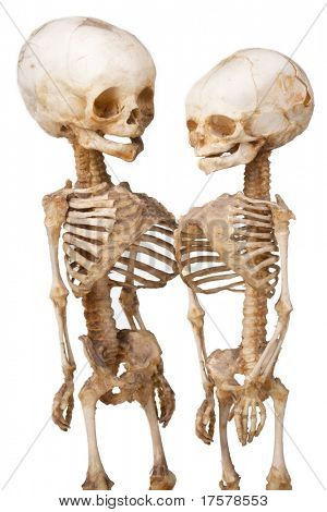 Two children's human medical skeleton over white