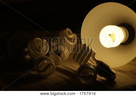Compact Light Bulbs