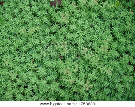 Texture Of Moss