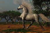 picture of bucking bronco  - A beautiful male unicorn prances in a magical forest - JPG