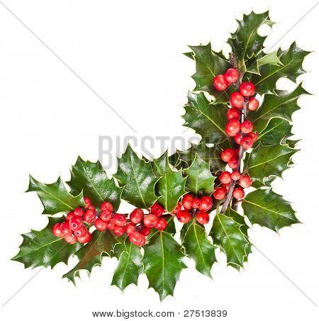 Navidad guirnalda de acebo que Ilex aislado en blanco