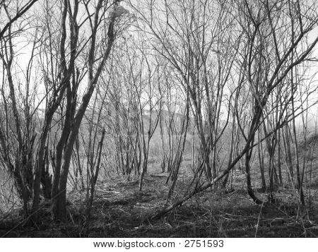 Desolate Woods In Black And White
