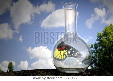 Butterfly In A Flask
