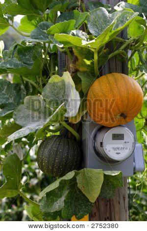 Pumpkin Electricity
