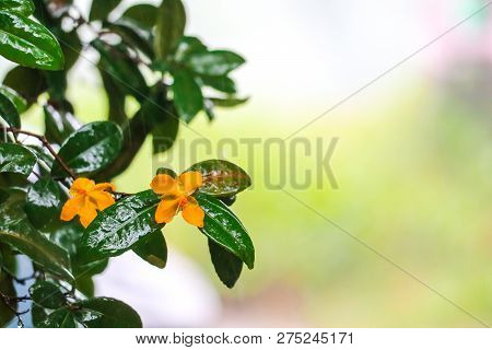 Micky Mouse Flower In The