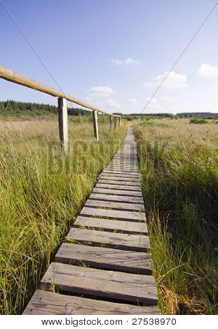 a wooden trail leading into the marsh at Hohes Venn, Belgium