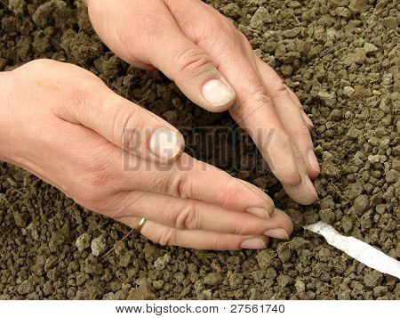 woman hands sowing seeds on the tape