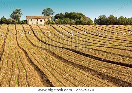 Plouged Field