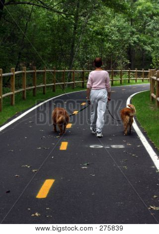 Woman Walking Dogs 001