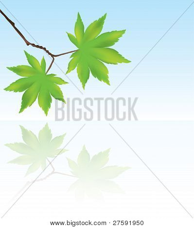 Vector Maple Leaves And Reflection In Water.