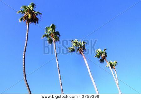Palms To The Sky