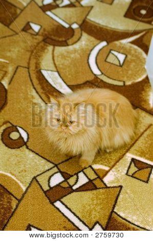 Cat Sitting On Carpet