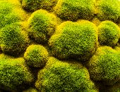 Fuzzy Green And Yellow Plants Used As Backdrop poster