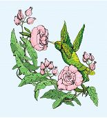 picture of hand drawn  - Colibri and wild pink flowers - JPG
