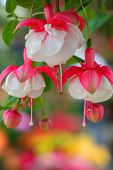 pic of beautiful flower  - Close up shot of beautiful flowers - JPG
