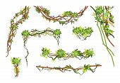 Jungle Vine Branches. Cartoon Hanging Liana Plants. Jungle Climbing Green Plant Vector Collection. I poster