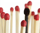 burnt match between new matchsticks, shallow depth of field