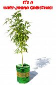 Female Cannabis Plant. Christmas Gift. Isolated on white. Room for text. Red Santa hat on a Green Gi poster