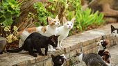 Group Of Stray Cats Sitting On Pathway Curb, Looking Up As Someone Is About To Throw Them Some Food. poster