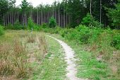 Trail Along The Forest With Coniferous And Deciduous Trees. A Person Walks Away On The Trail poster