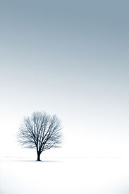 image of winter trees  - tree - JPG