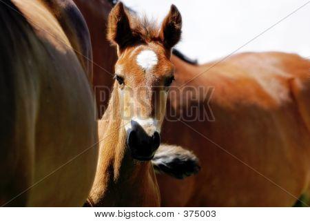 Baby Horse Peaking