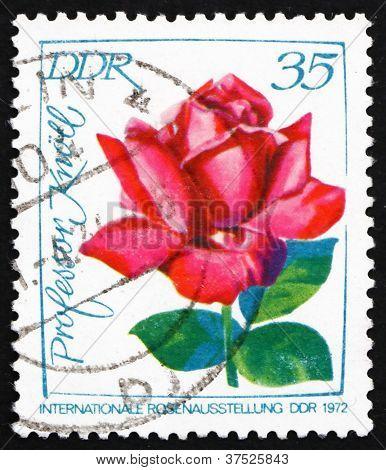 Postage stamp GDR 1972 Prof. Knoll, Rose