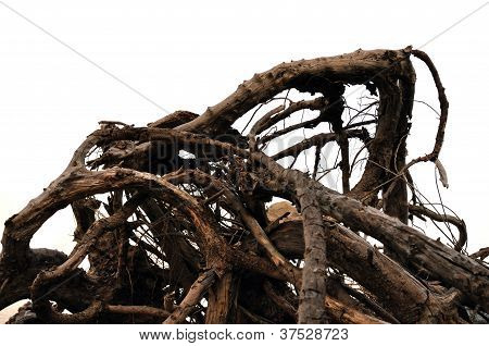 Driftwood Abstract Tree Branches
