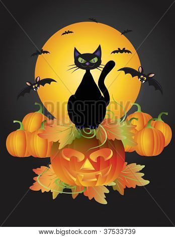 Halloween Black Cat On Carved Pumpkin Illustration