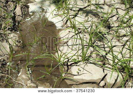 Cracked Soil And Water