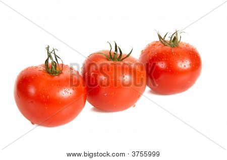 Three Tomatos Are In Dew.