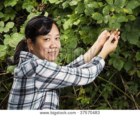Mature Women Picking Blackberries
