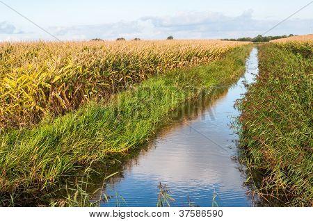 Paisagem Rural holandesa no Outono