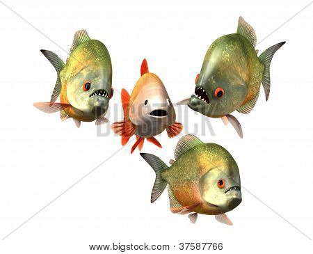 interview concept, goldfish and piranhas