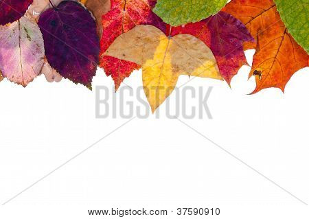 One Side Frame From Multicolored Autumn Leaves