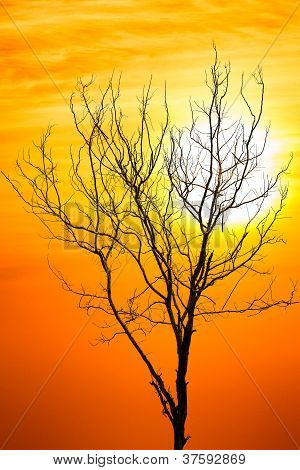 Death Tree Over Sky Background In Sunset