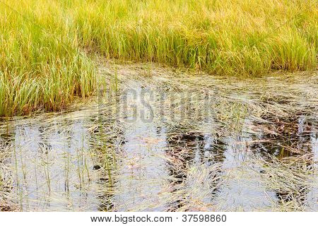 Marshland grass sedges background texture pattern