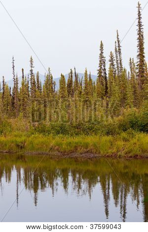 Taiga at McQuesten River near town of Mayo Canada