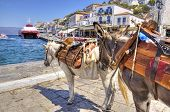 stock photo of hydra  - Two donkeys at the Greek island Hydra - JPG
