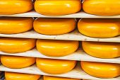 image of meals wheels  - Many Dutch cheeses aligned on a shelf - JPG