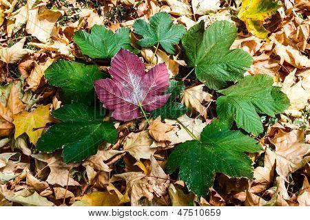 shape with autumn foliage