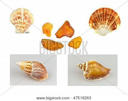 Conchas, caracoles y ámbar