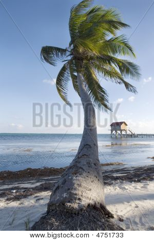 Palm Tree And Hut On The Beach